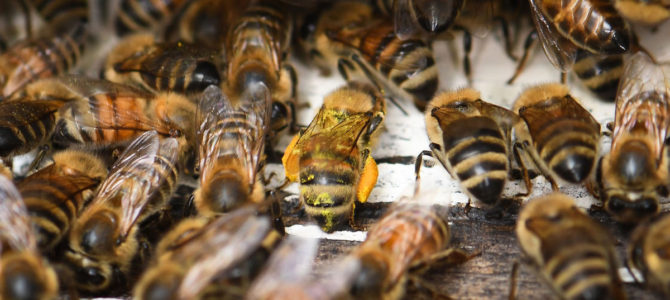 There's more to honeybees than just the buzz